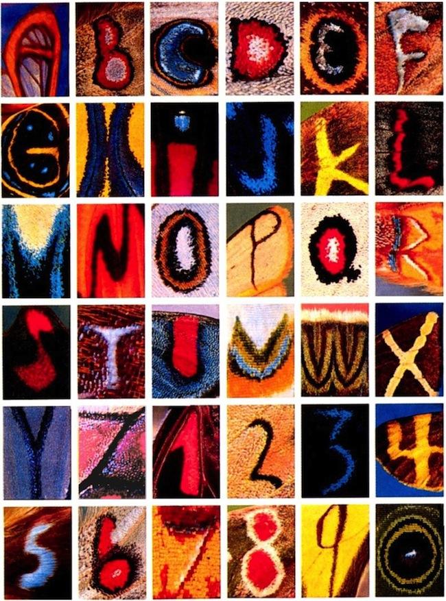 Alphabet_papillons
