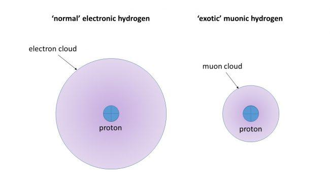 proton-rayon-electron-muon